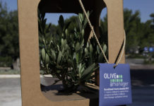 olive manager