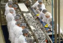 Prerada proizvoda ribarstva