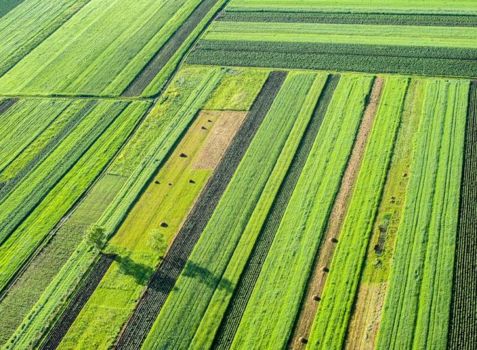 Farm/IT