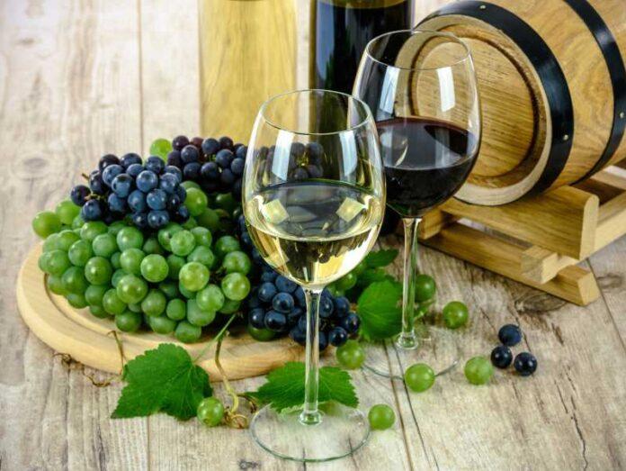 vino istraživanje
