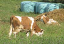 program razvoja ekološke poljoprivrede