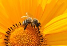 program potpora pčelarima